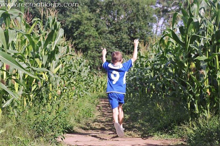 Pop Corn Labyrinthe, labyrinthe de maïs
